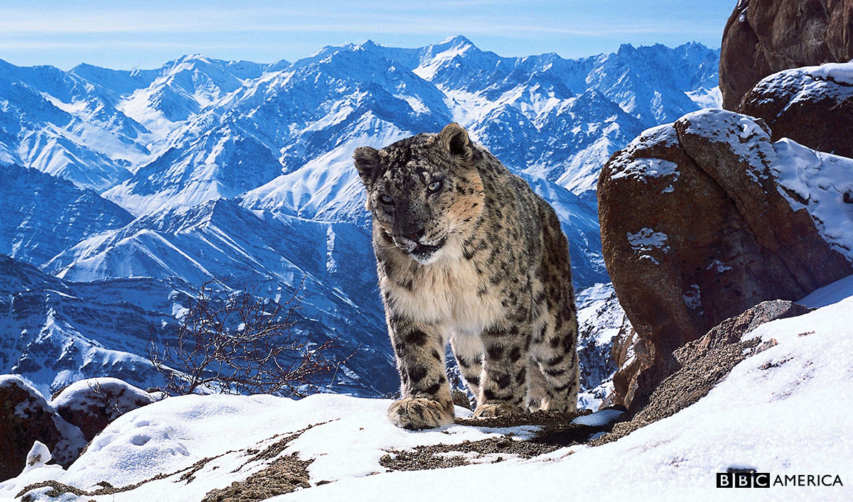 Find Your Happy Place When <i>Planet Earth II</i> Premieres on BBC America
