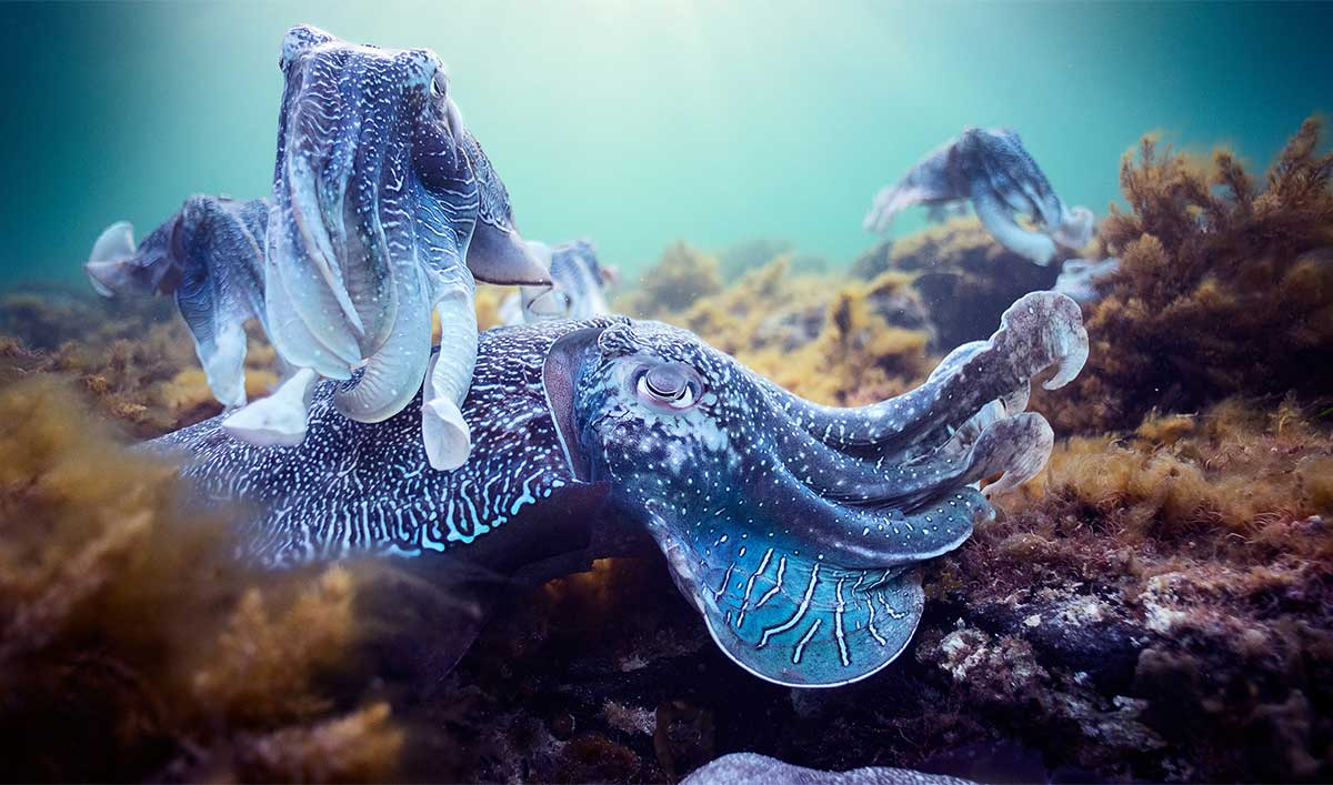 Explore the Depths of the Sea With <em>Planet Earth: Blue Planet II</em>