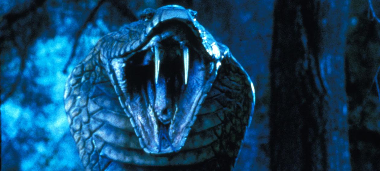 Cobra Assassina