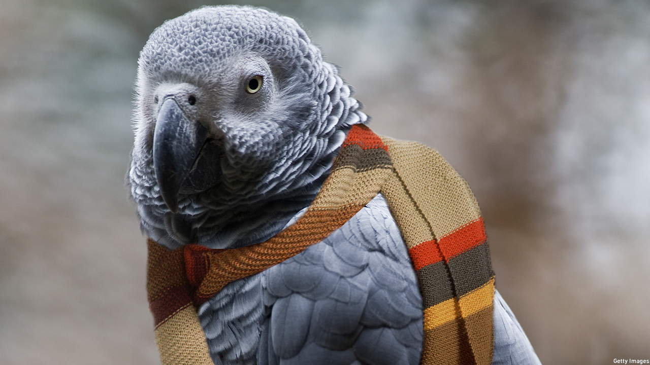 'Doctor Who's Day Roundup: The Gallifreyan Parrot