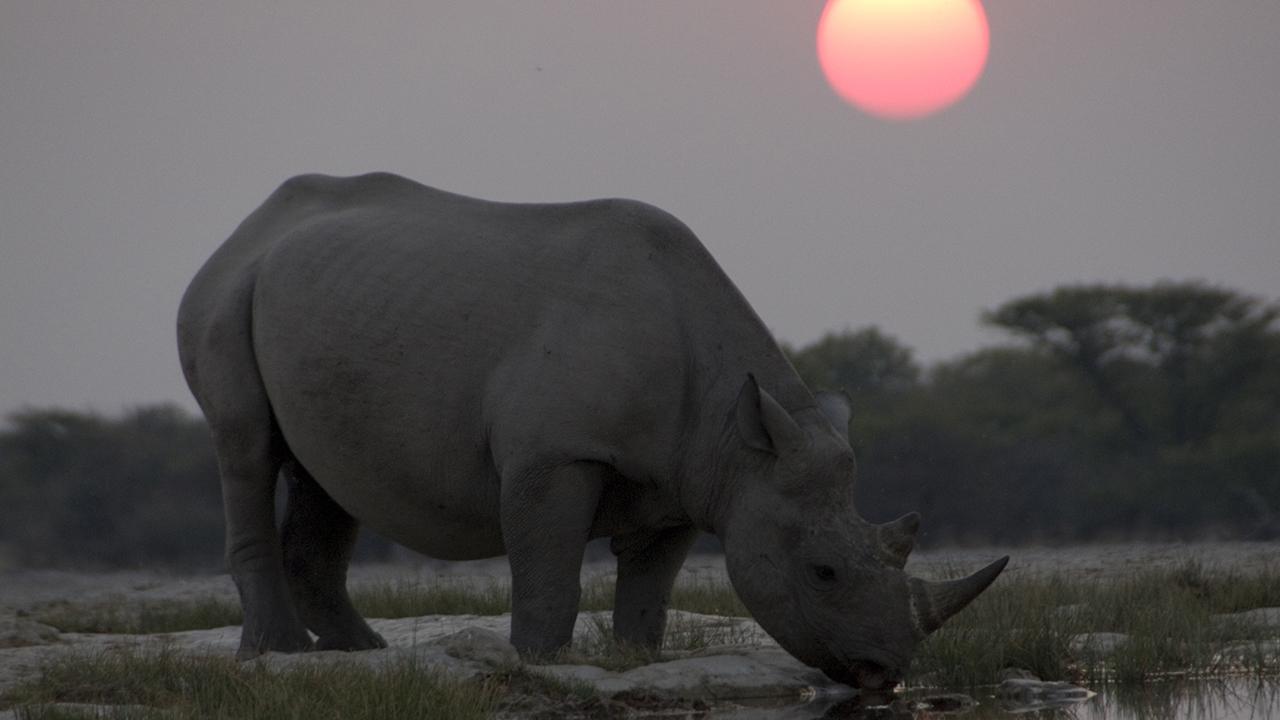 'Africa': Kalahari