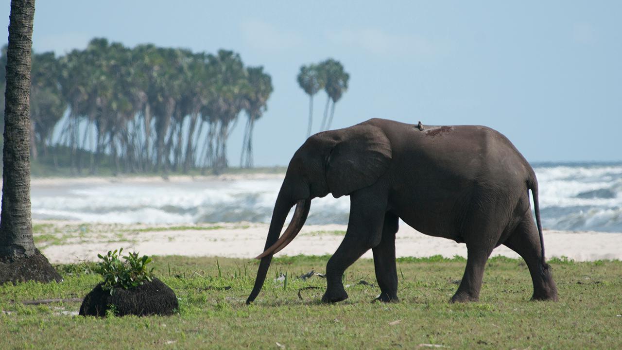 'Africa': Congo