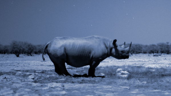 Q&A: No Party Like a Rhino Party
