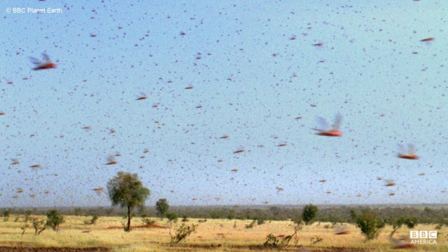 A massive swarm of locusts invade Mauritania.