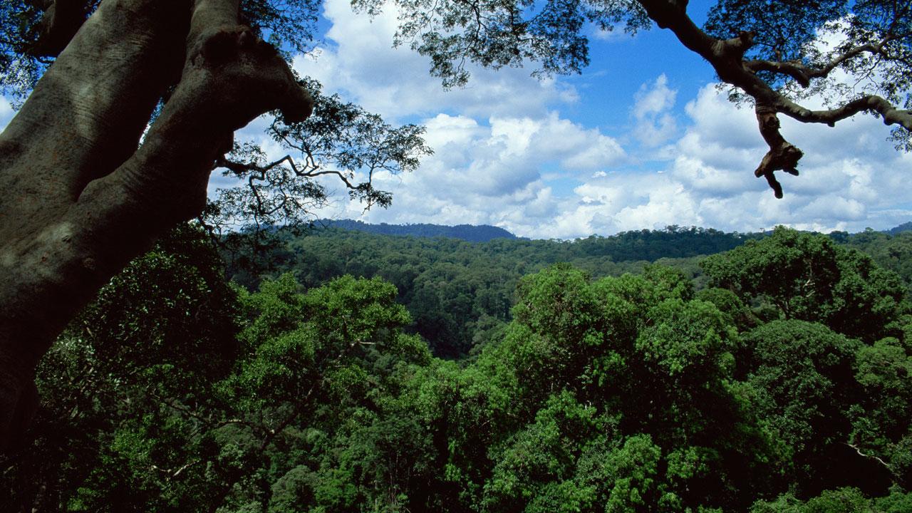 Jungles planet earth bbc america - Plante jungle ...