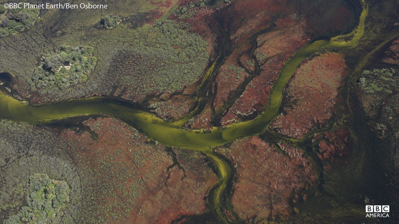 An aerial view of the Okavango Swamp in Botswana.
