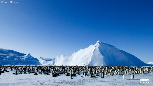Emperor penguins gather on an iceberg in Antarctica.