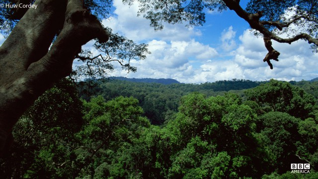Canopy view over Costa Rican rainforest.