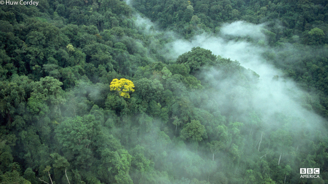 Misty clouds over fruiting tree in Costa Rica.
