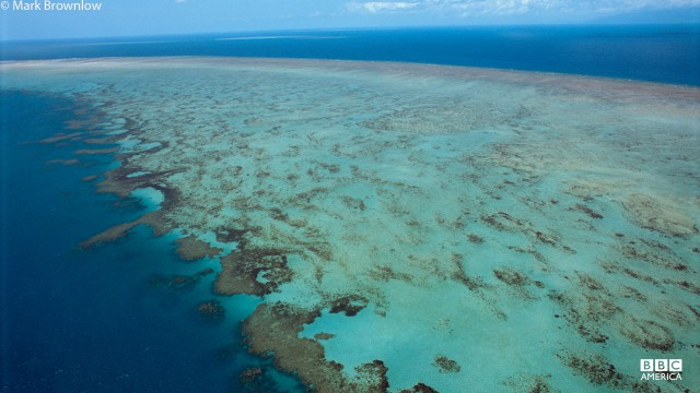 Aerial view of the Great Barrier Reef off the coast of Queensland, Australia.