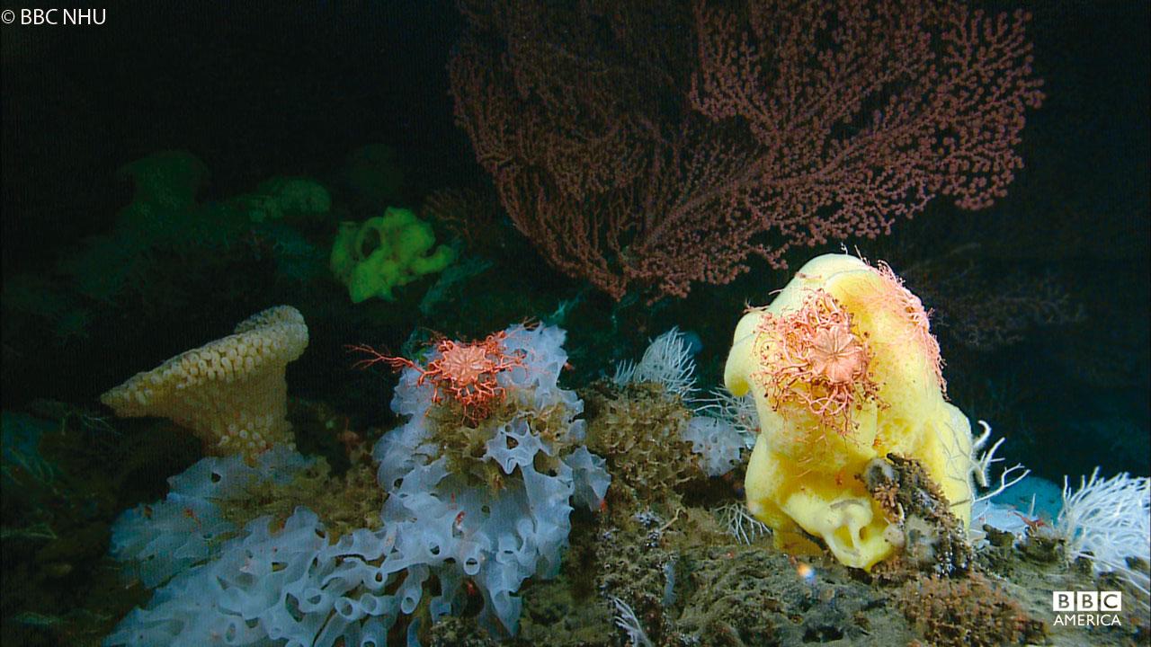 Coral gardens on Davidson Seamount off the coast of California.