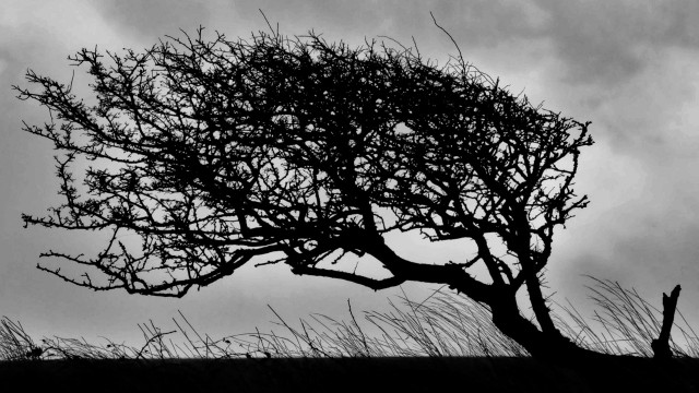 Beachy Head Tree, Beachy Head, UK - Philine V.