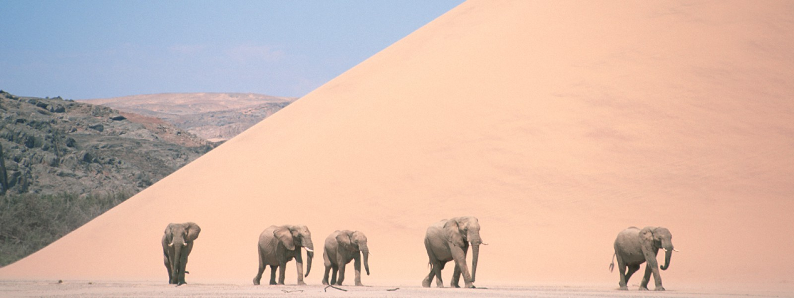 planetearth_photo_captiongallery_elephant_web_01