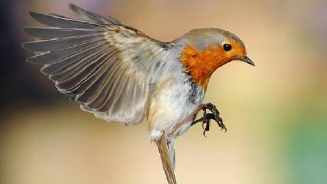 Fit Bird