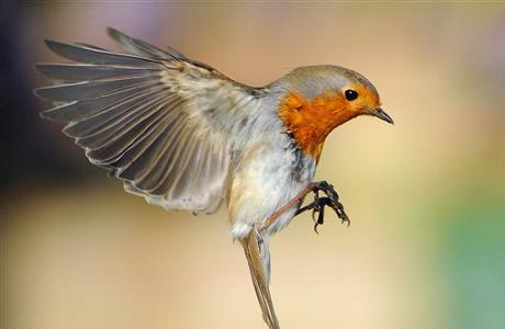 Pretty Bird 10 things brits say…and what americans think we mean ...  Bird