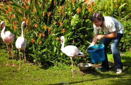 richardhammond_flamingos