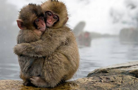 Snow Monkeys, FINAL