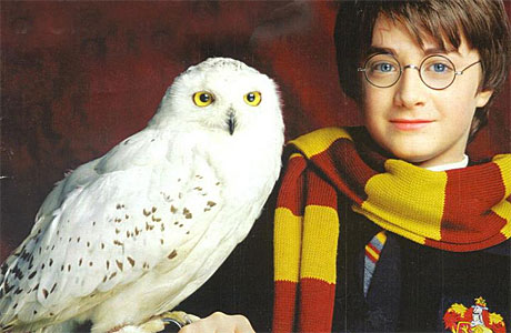 Hedwig, North Yorkshire post-owl.