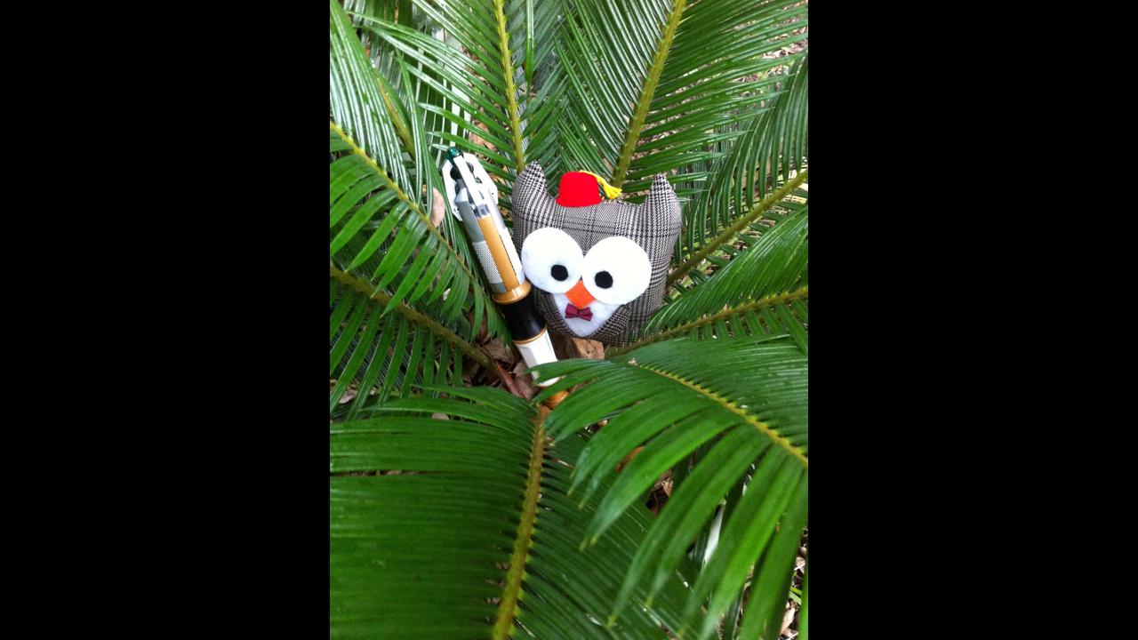 In a Sago palm in Ocean Springs, Mississippi. - Frances S.