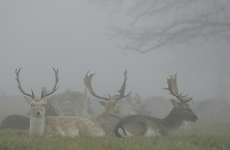 Richmond Park. (AP)