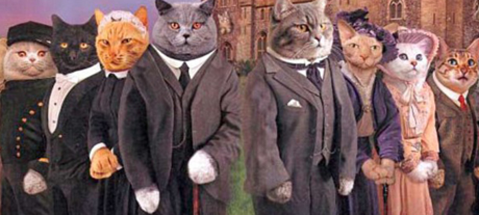 Image result for downton tabby