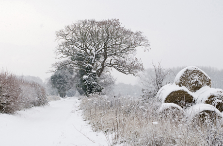 View of snow covered lane and round straw bales, Postwick, Norfolk, England, december (Photo by: Minden Pictures/AP Images)