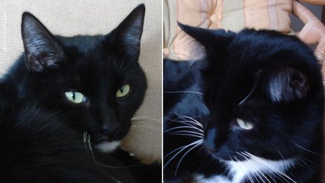 Real-life cat burglars turn to crime. (BBC)