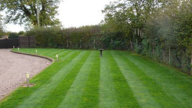 Freshly Mowed Grass