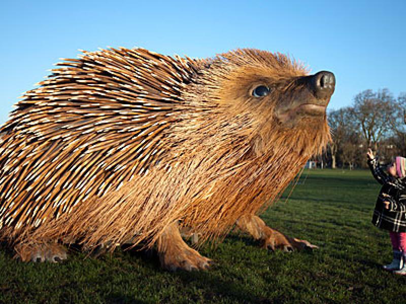 Giant hedgehog