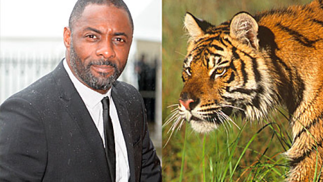 Idris Elba and a Tiger (PA Images)
