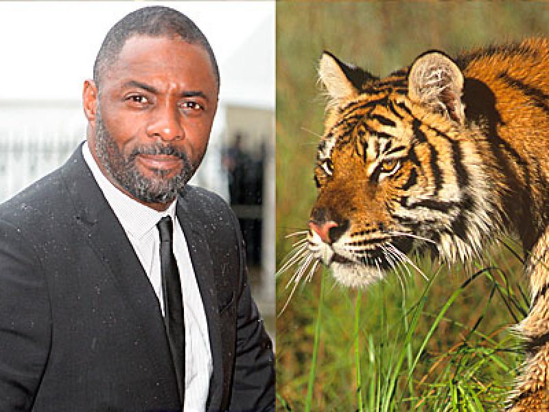 Idris Elba and a Tiger (PA Images)