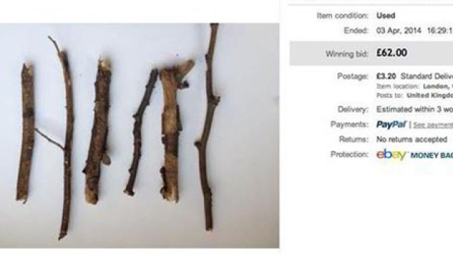 Twigs, eBay