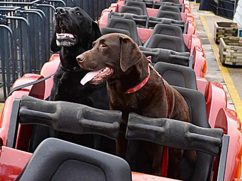 Dogs on a roller coaster