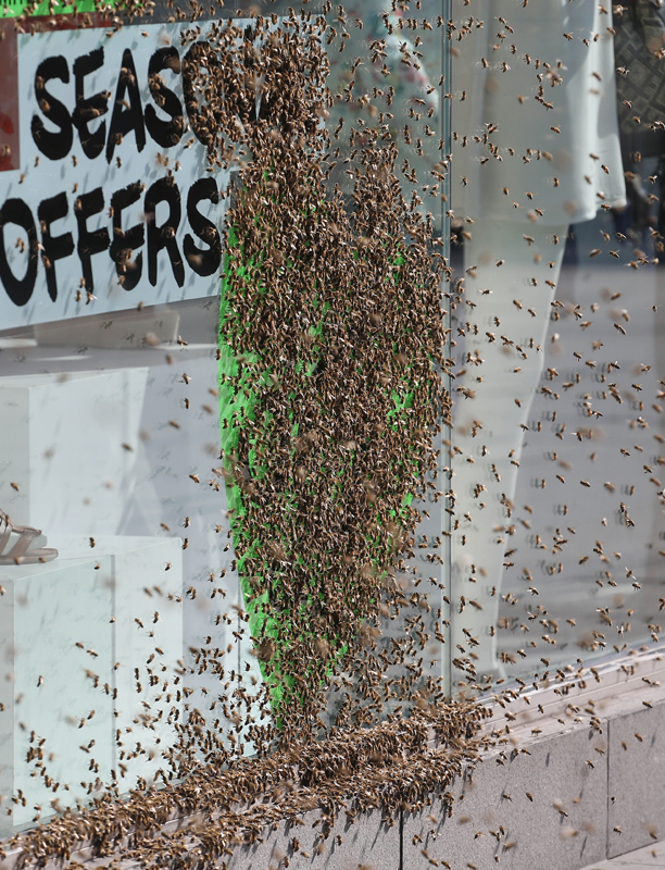 This image of 5,000 honeybees is not for the faint of heart. (Philip Toscano/PA/AP)