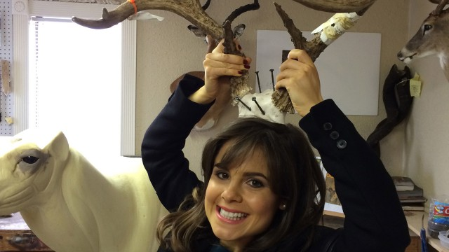 Poppy holding stag horns above her head in the Safari Life Taxidermy studio.