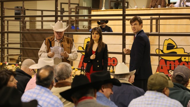 Auctioneer Anthony Mihalski enlists the help of Poppy & Georgie at the San Antonio cattle auction.