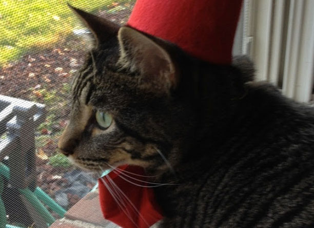 Cat Fez by Allons-y Kimberley