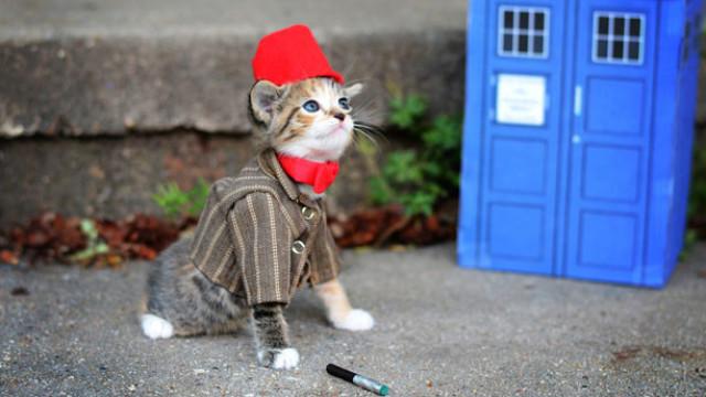 Kitten Doctor, by Wendy McKee