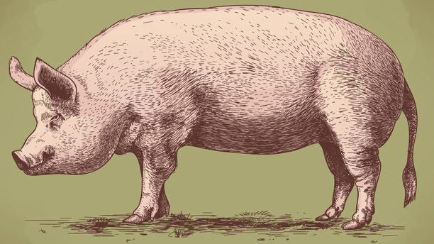 Pork (Photo: Fotolia).