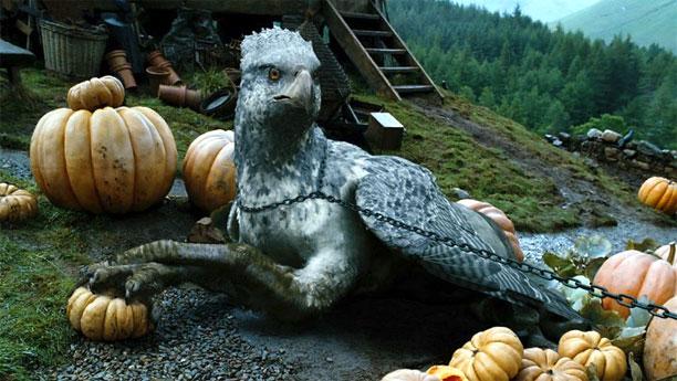 Buckbeak the hippogriff (Pic: Warner Brothers)
