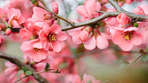 Spring blossoms. (Photo: Fotolia)