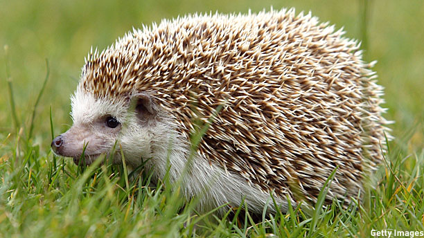 A world-saving hedgehog (Pic: Justin Sullivan/Getty Images)
