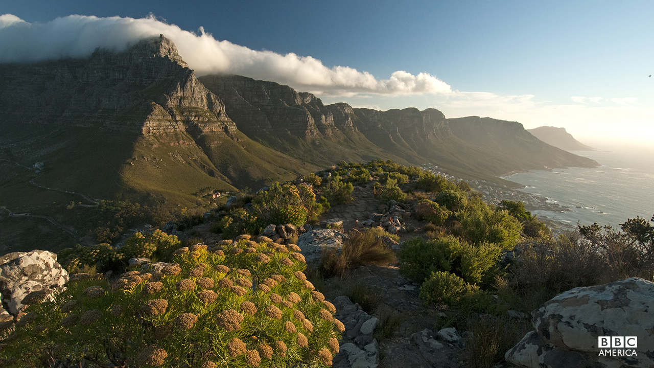 Episode 4  Table Mountain shrouded beneath the billowing 'Table Cloth'. This icon of the continent overlooks Africa's southernmost tip, the Cape of Good Hope, where the cold Atlantic Ocean meets the warm Indian Ocean to create these clouds over Table Mountain. But the interaction between these two great oceans does more than just create cloud, it shapes the whole of Africa's southern Cape.