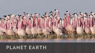 BBCA_PlanetEarth_320x180