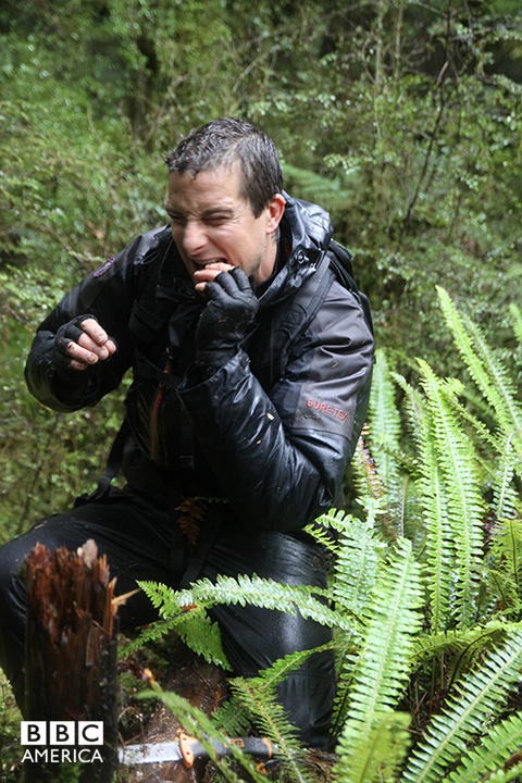 Bear Grylls in Maori.