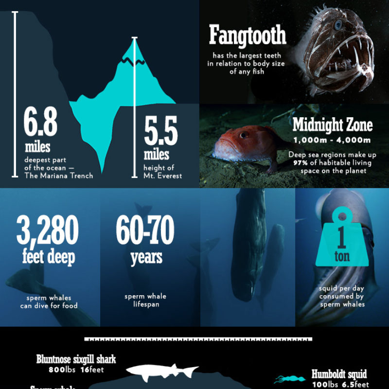 BPII_infographic_ep2_3-final