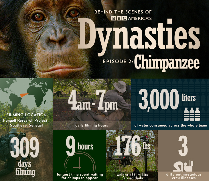 Dynasties_infographic_bts_chimp