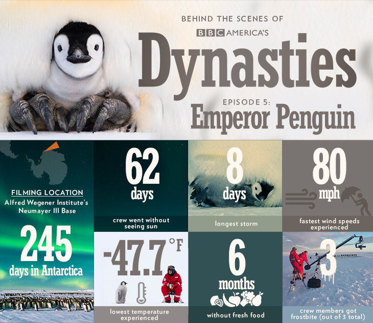 Dynasties_infographic_bts_penguin