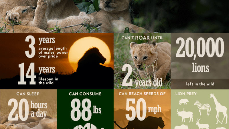 Dynasties_infographic_lion