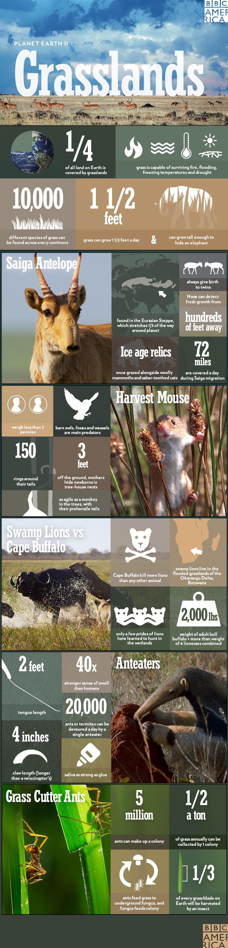 PEII_infographic_grasslands_1